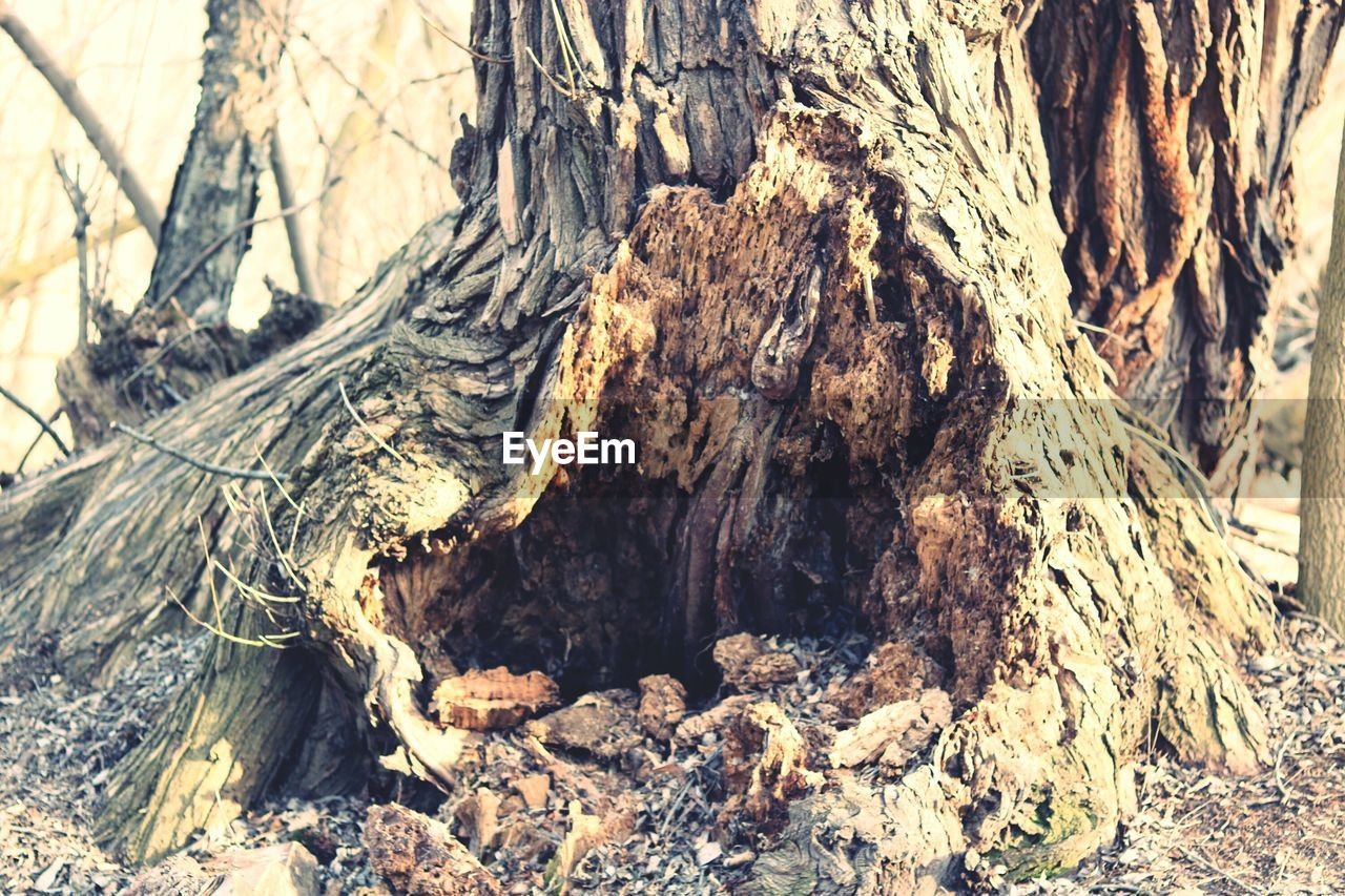 nature, textured, day, rough, tree, tree trunk, wood - material, no people, outdoors, sunlight, close-up, dead tree