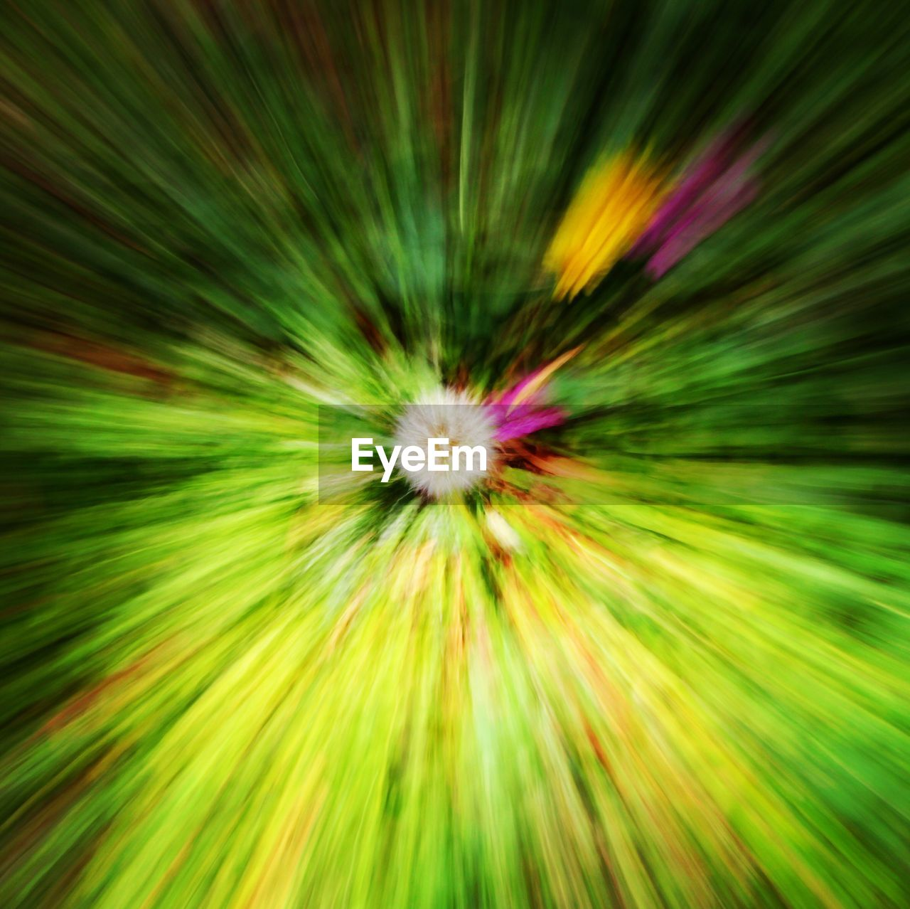 backgrounds, abstract, full frame, motion, plant, flower, no people, vibrant color, yellow, flowering plant, multi colored, freshness, blurred motion, growth, beauty in nature, green color, nature, close-up, exploding, fragility, abstract backgrounds, bright, flower head, textured effect