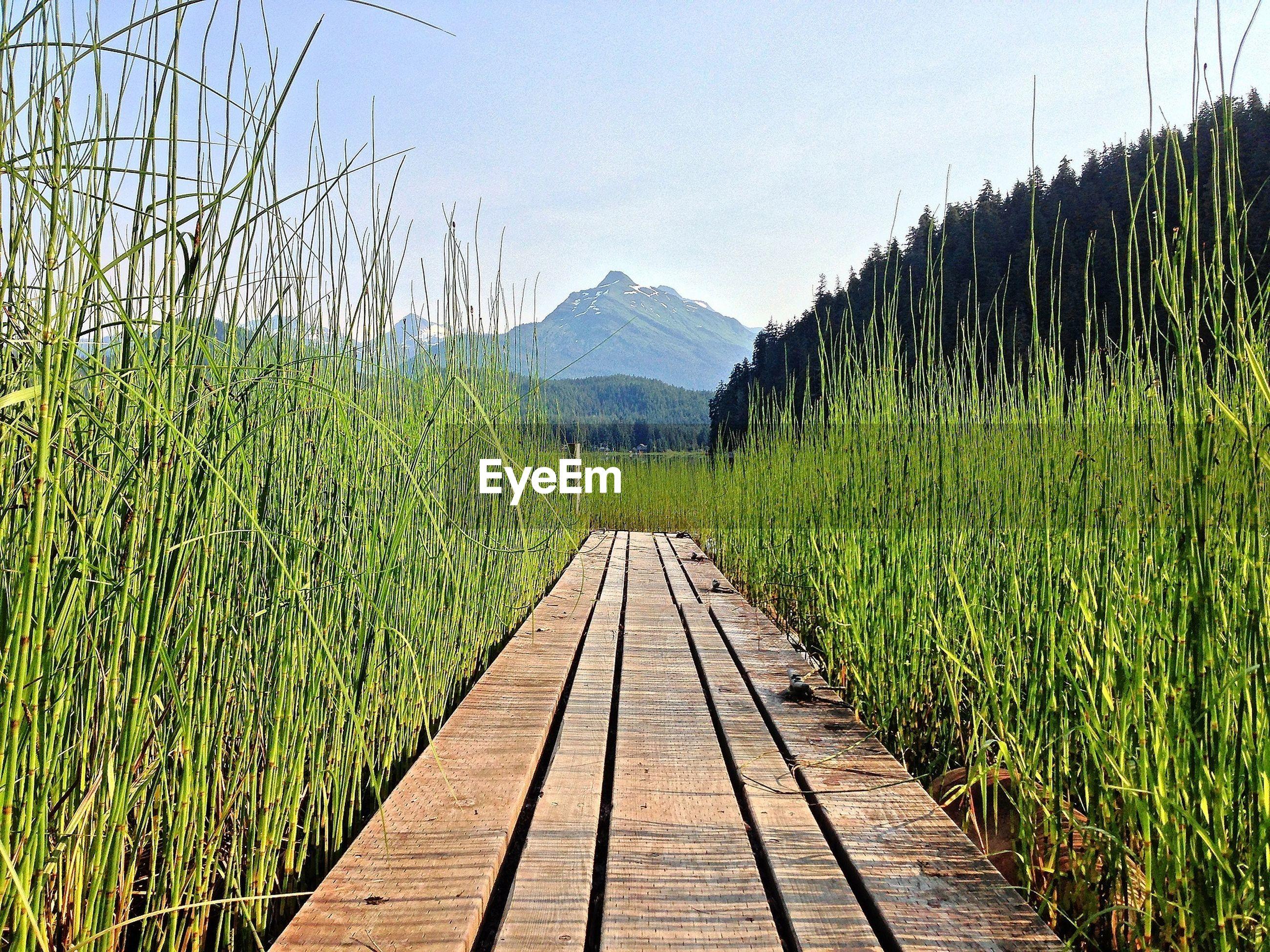 Boardwalk in forest against clear sky