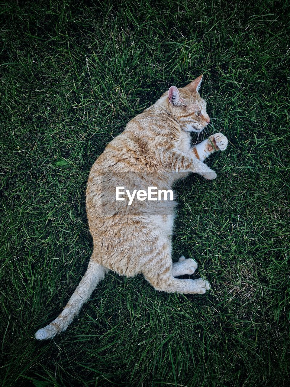 High angle view of cat on field