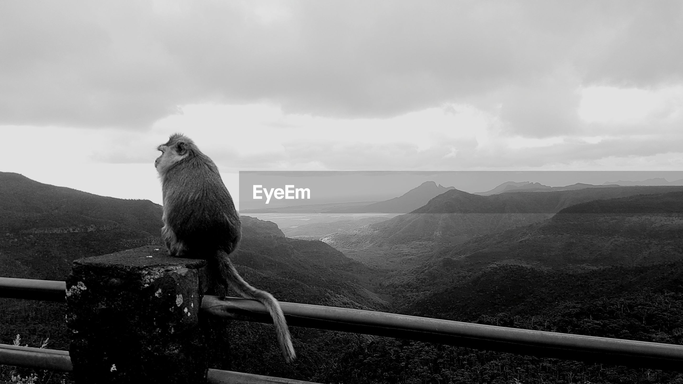 Monkey sitting on railing against mountains