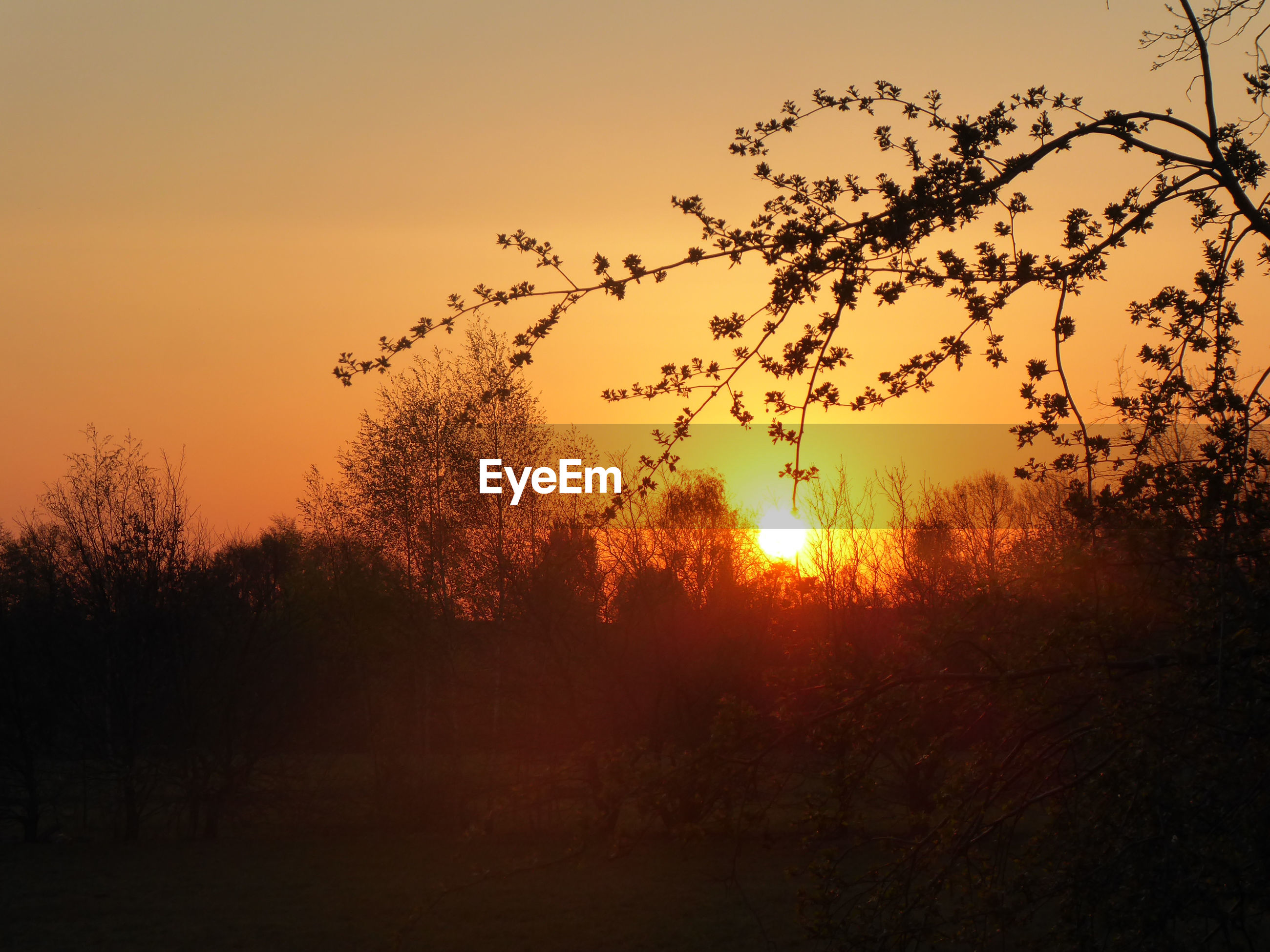sunset, sky, plant, beauty in nature, tranquility, tree, tranquil scene, silhouette, orange color, scenics - nature, nature, growth, no people, non-urban scene, sun, idyllic, land, field, outdoors, sunlight