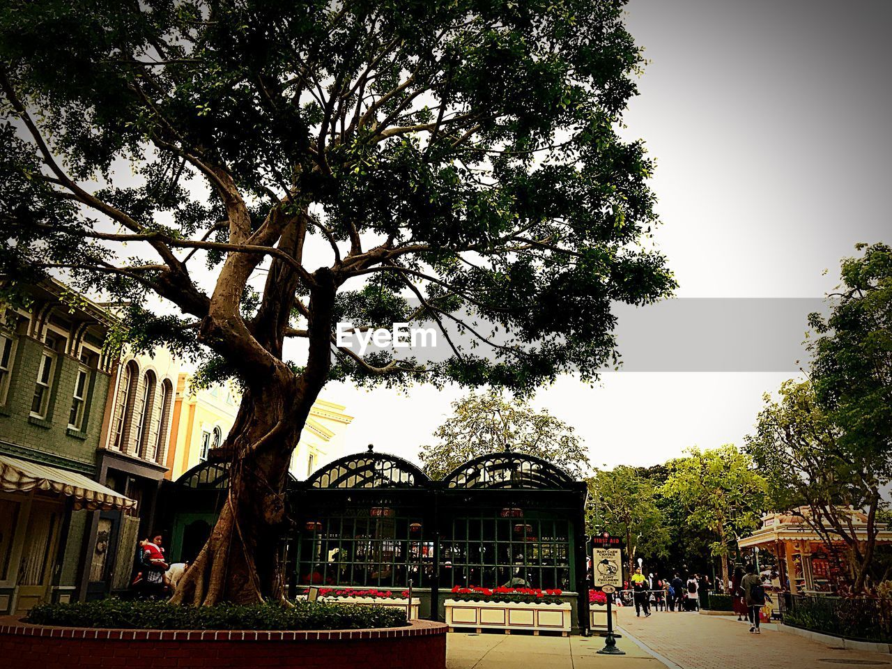 tree, architecture, built structure, building exterior, day, outdoors, growth, real people, city, clear sky, sky, nature