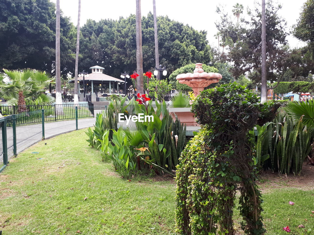 plant, tree, nature, green color, growth, flower, day, park, flowering plant, grass, architecture, park - man made space, no people, built structure, outdoors, beauty in nature, front or back yard, seat, garden, garden path