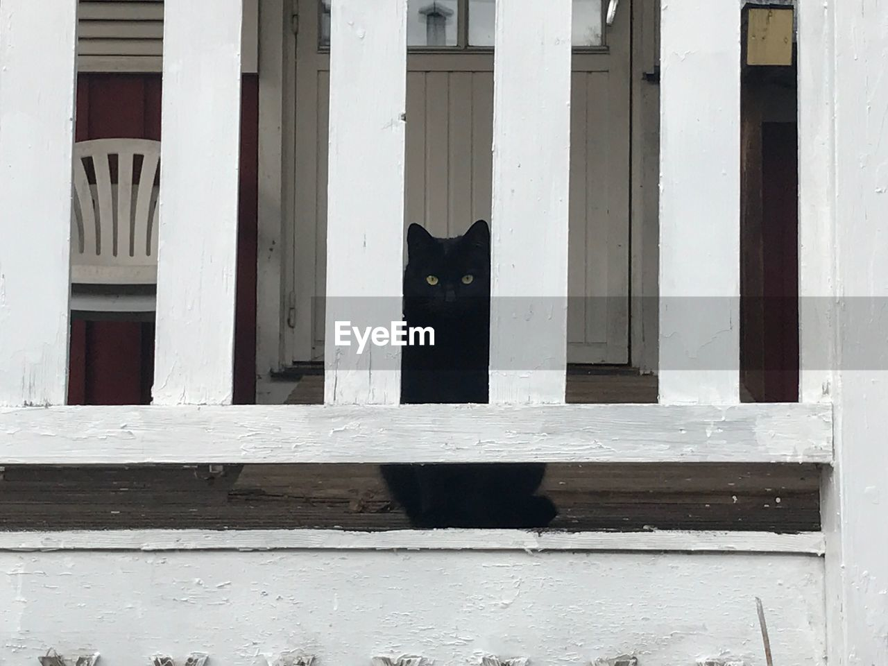 wood - material, window, architecture, built structure, outdoors, building exterior, no people, day, mammal, pets, domestic animals, animal themes, close-up