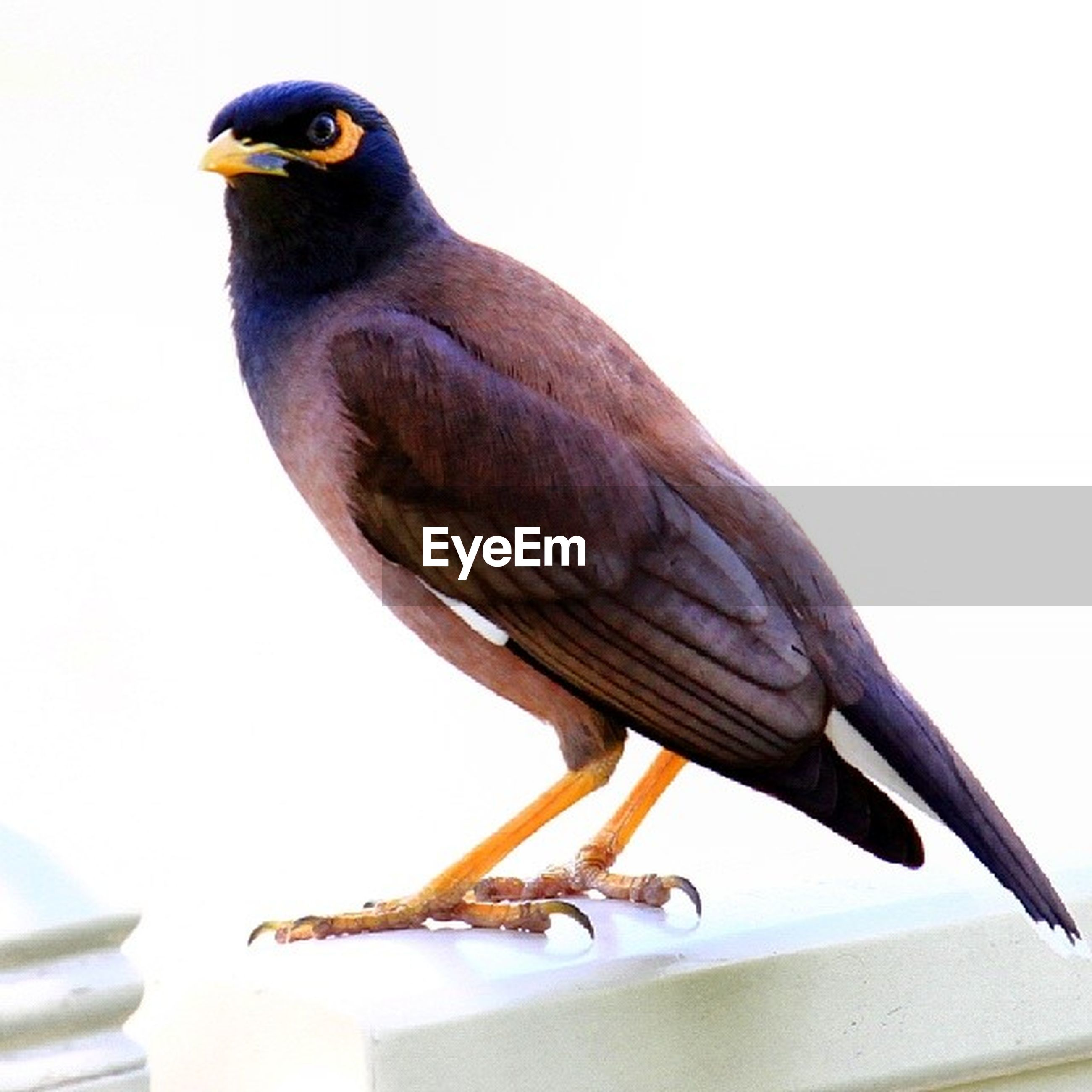animal themes, bird, animals in the wild, one animal, wildlife, perching, close-up, beak, full length, bird of prey, side view, no people, focus on foreground, low angle view, indoors, day, nature, animal head, wood - material, two animals