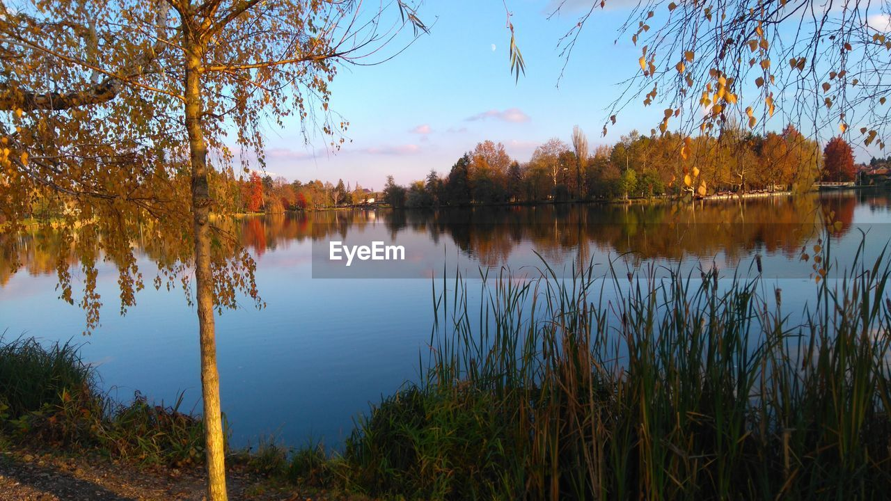 tree, reflection, lake, nature, water, tranquil scene, autumn, beauty in nature, tranquility, scenics, outdoors, growth, no people, change, sky, standing water, day, leaf, plant, grass
