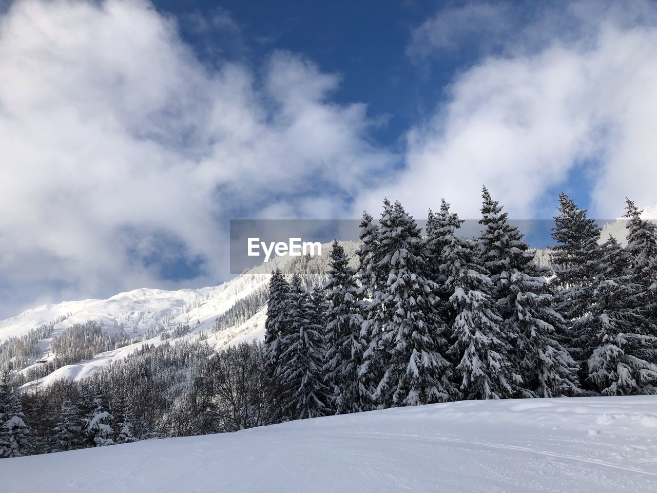 winter, cold temperature, snow, cloud - sky, scenics - nature, tranquil scene, beauty in nature, sky, tranquility, white color, tree, day, plant, nature, non-urban scene, no people, mountain, covering, environment, snowcapped mountain, coniferous tree