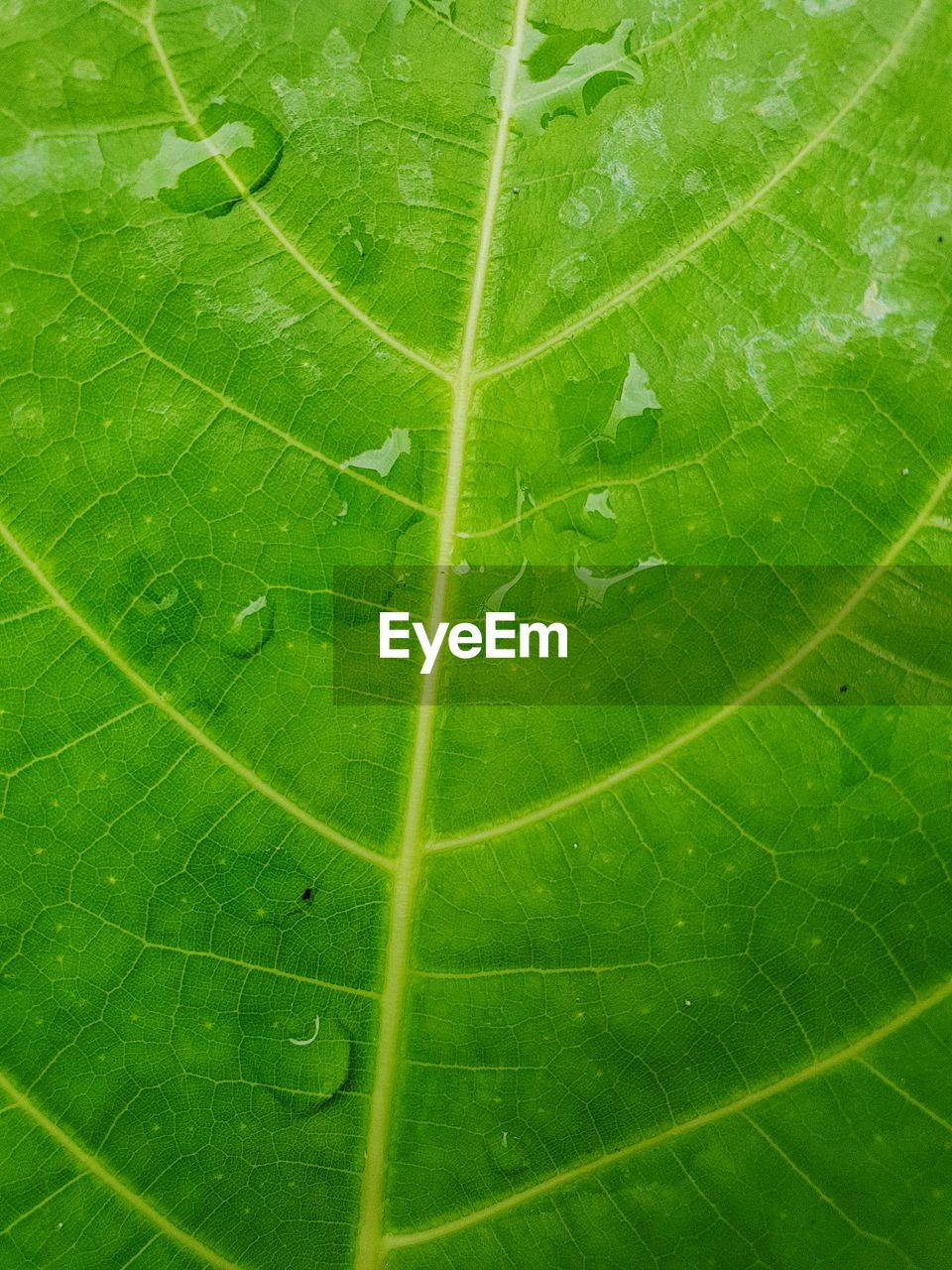 green color, leaf, plant part, leaf vein, nature, close-up, plant, no people, beauty in nature, full frame, backgrounds, growth, outdoors, high angle view, water, drop, freshness, day, natural pattern, leaves