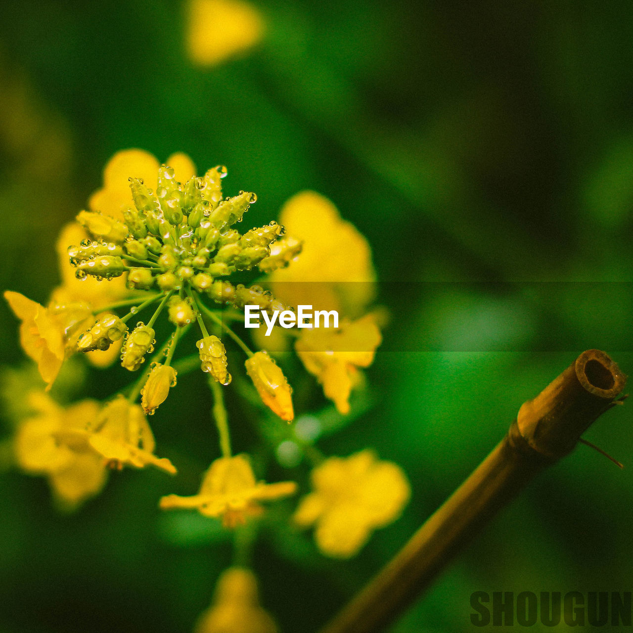 nature, flower, focus on foreground, no people, beauty in nature, growth, outdoors, plant, day, yellow, close-up, freshness, fragility, flower head