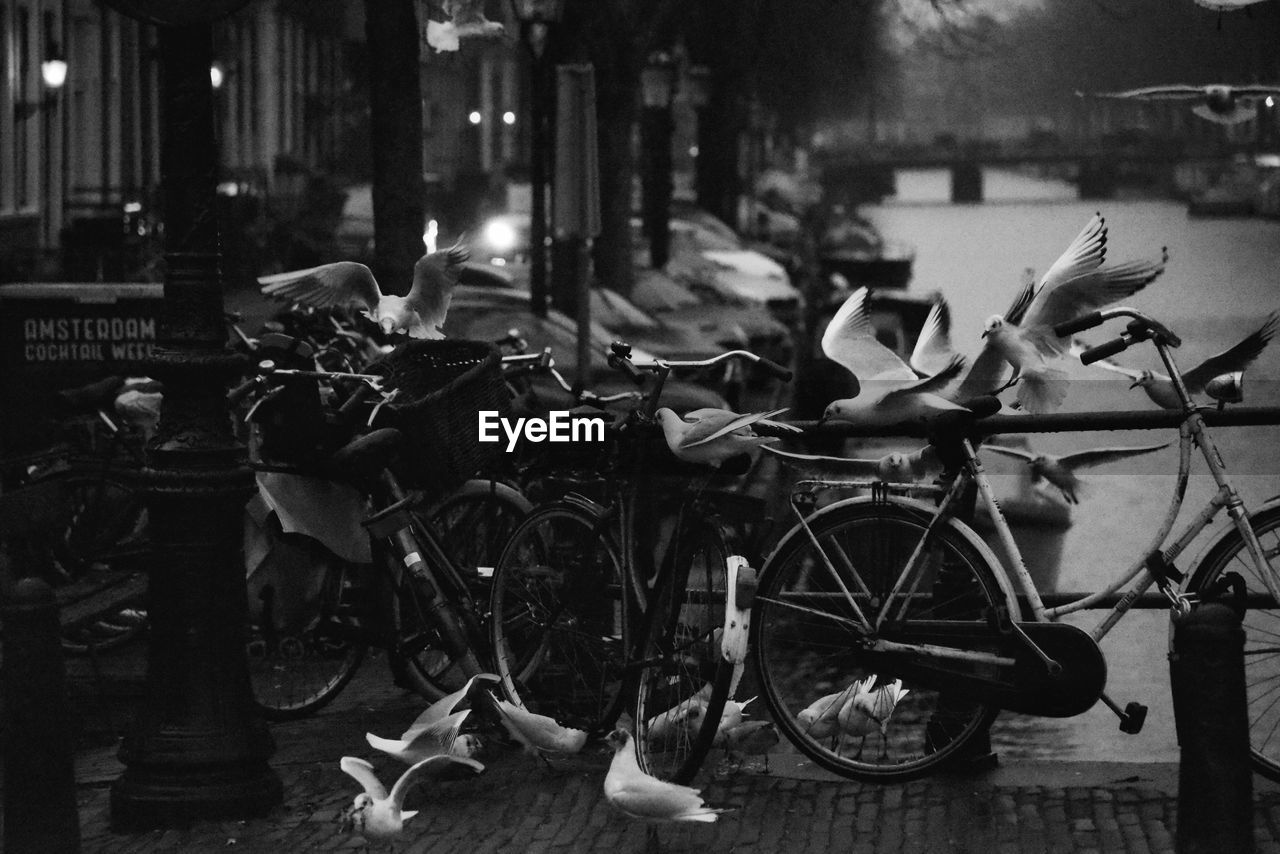 bicycle, transportation, mode of transportation, land vehicle, street, city, no people, architecture, built structure, focus on foreground, building exterior, outdoors, animal, nature, animal themes, night, vertebrate, large group of objects, illuminated