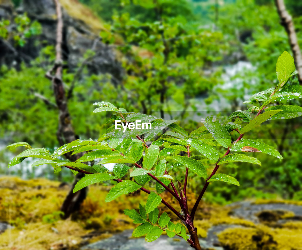 growth, green color, leaf, plant, plant part, beauty in nature, focus on foreground, day, nature, close-up, no people, land, outdoors, tranquility, wet, selective focus, field, tree, forest, freshness, leaves