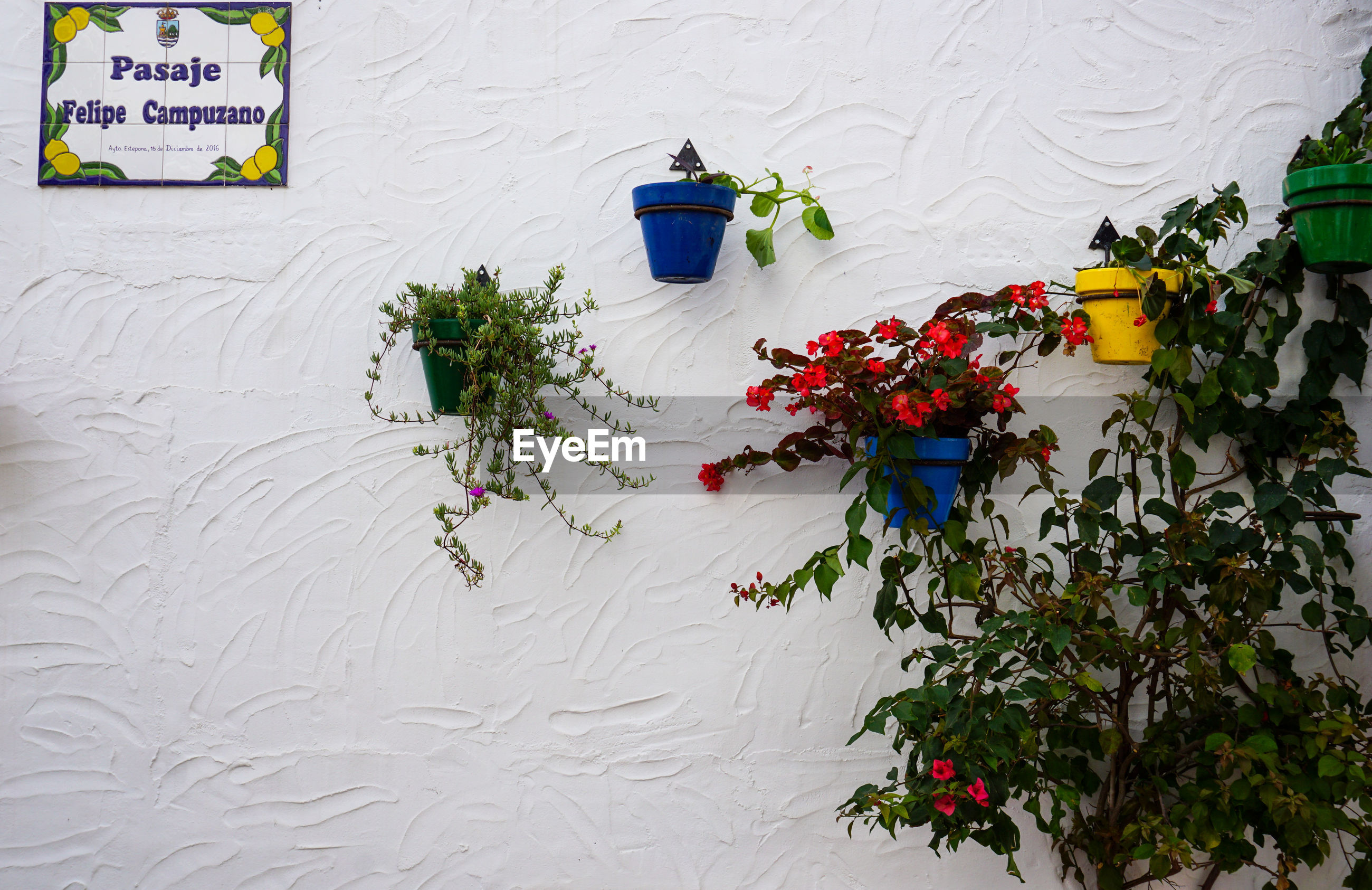 HIGH ANGLE VIEW OF FLOWERING PLANTS AGAINST WHITE WALL