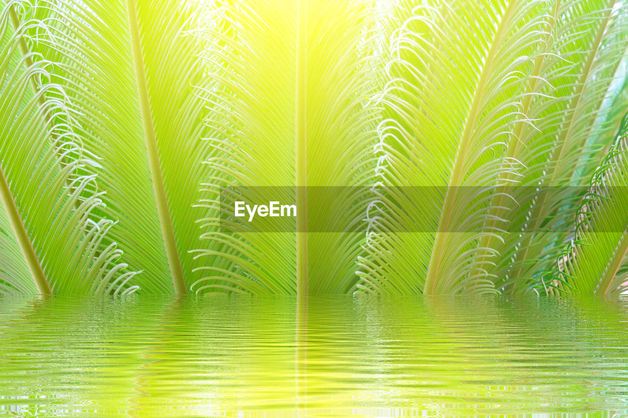 leaf, green color, nature, tree, plant part, plant, palm tree, tropical climate, palm leaf, beauty in nature, no people, backgrounds, water, tranquility, outdoors, freshness, land, frond, close-up, textured effect, rainforest