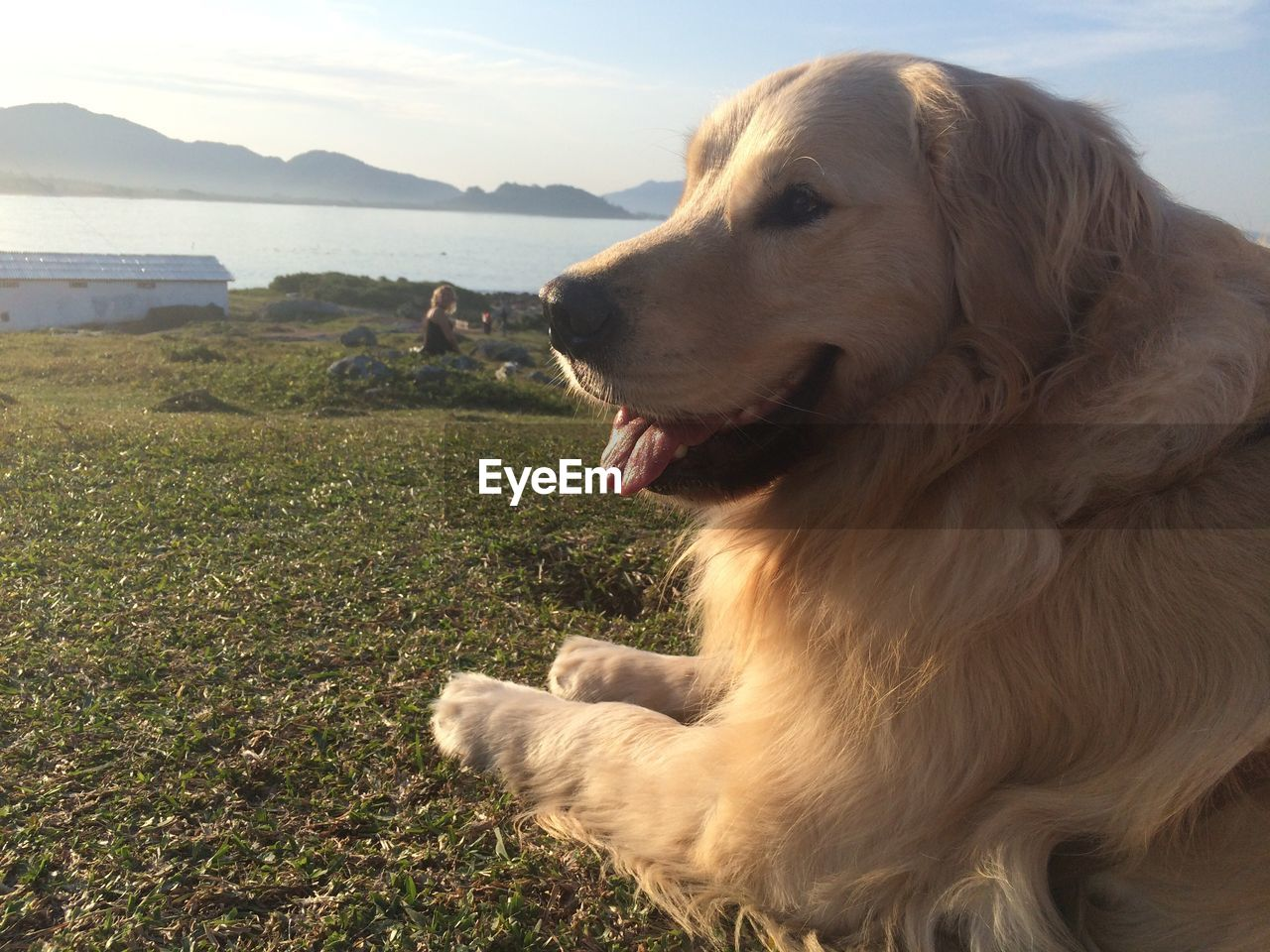 one animal, dog, canine, domestic animals, pets, animal, domestic, animal themes, mammal, vertebrate, looking away, looking, nature, no people, grass, land, day, close-up, water, mouth open, outdoors, animal head