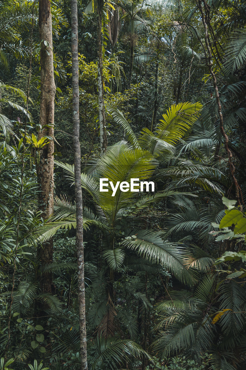tree, growth, plant, forest, green color, beauty in nature, land, tree trunk, trunk, nature, palm tree, tranquility, tropical climate, no people, leaf, day, fern, woodland, lush foliage, tranquil scene, outdoors, coconut palm tree, palm leaf, pine tree, rainforest, coniferous tree, tropical tree, pine woodland