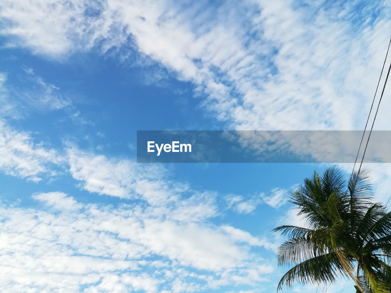 cloud - sky, sky, palm tree, tree, tropical climate, plant, low angle view, beauty in nature, tranquility, no people, day, scenics - nature, nature, growth, blue, tranquil scene, outdoors, idyllic, coconut palm tree, palm leaf, tropical tree