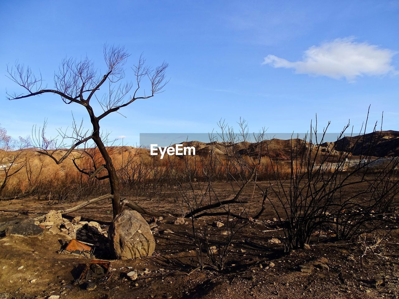 bare tree, tranquil scene, landscape, tranquility, nature, dead plant, beauty in nature, scenics, outdoors, arid climate, no people, day, dead tree, sky, tree, branch, dried plant