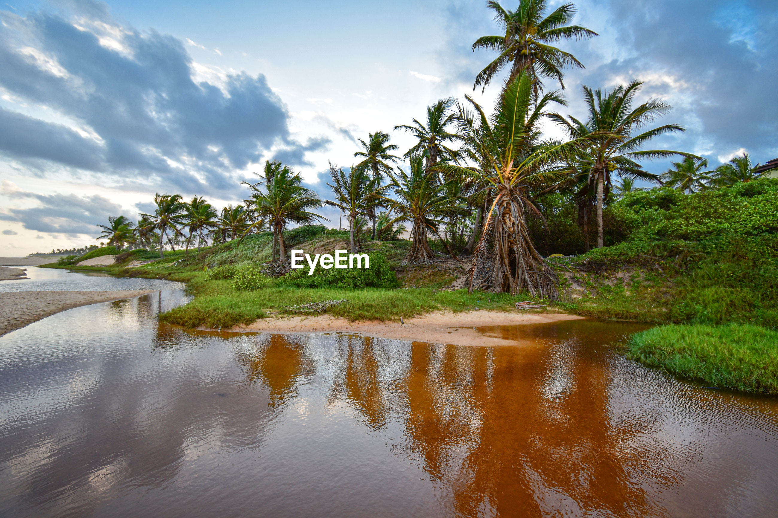 SCENIC VIEW OF PALM TREES ON RIVERBANK AGAINST SKY