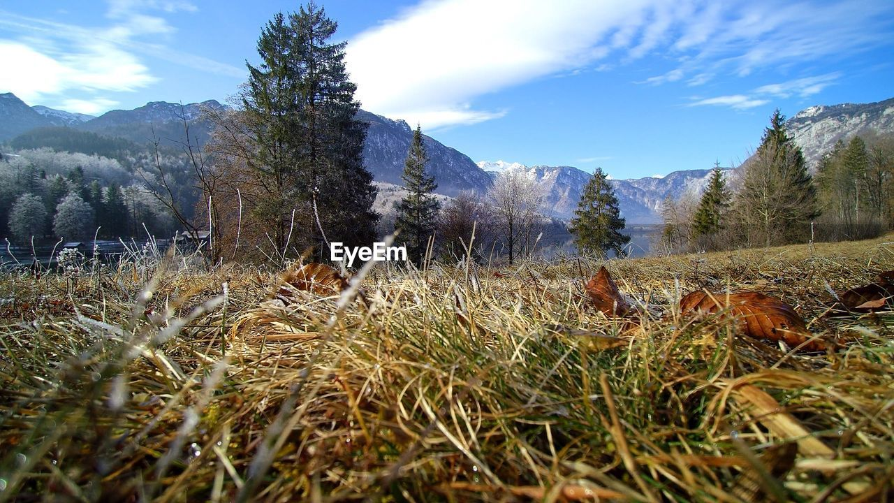 mountain, nature, sky, field, grass, beauty in nature, tranquil scene, tranquility, scenics, non-urban scene, landscape, day, cloud - sky, tree, growth, mountain range, no people, outdoors, snow, winter, cold temperature, animal themes, mammal