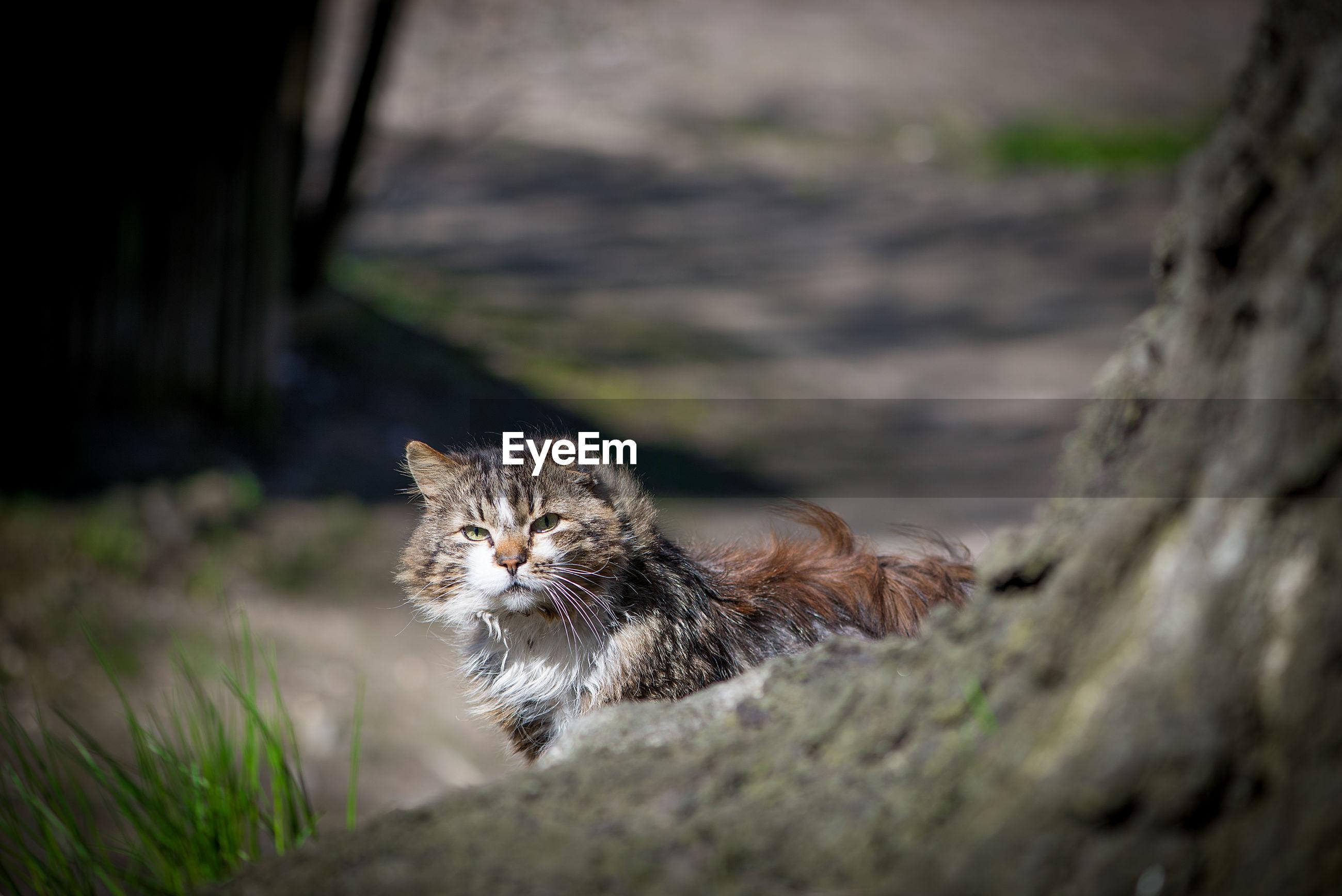 Side view portrait of cat on field