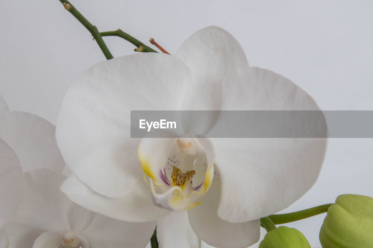 flower, flowering plant, plant, beauty in nature, petal, fragility, vulnerability, white color, freshness, inflorescence, flower head, close-up, growth, nature, no people, orchid, pollen, botany, outdoors, softness, flower arrangement