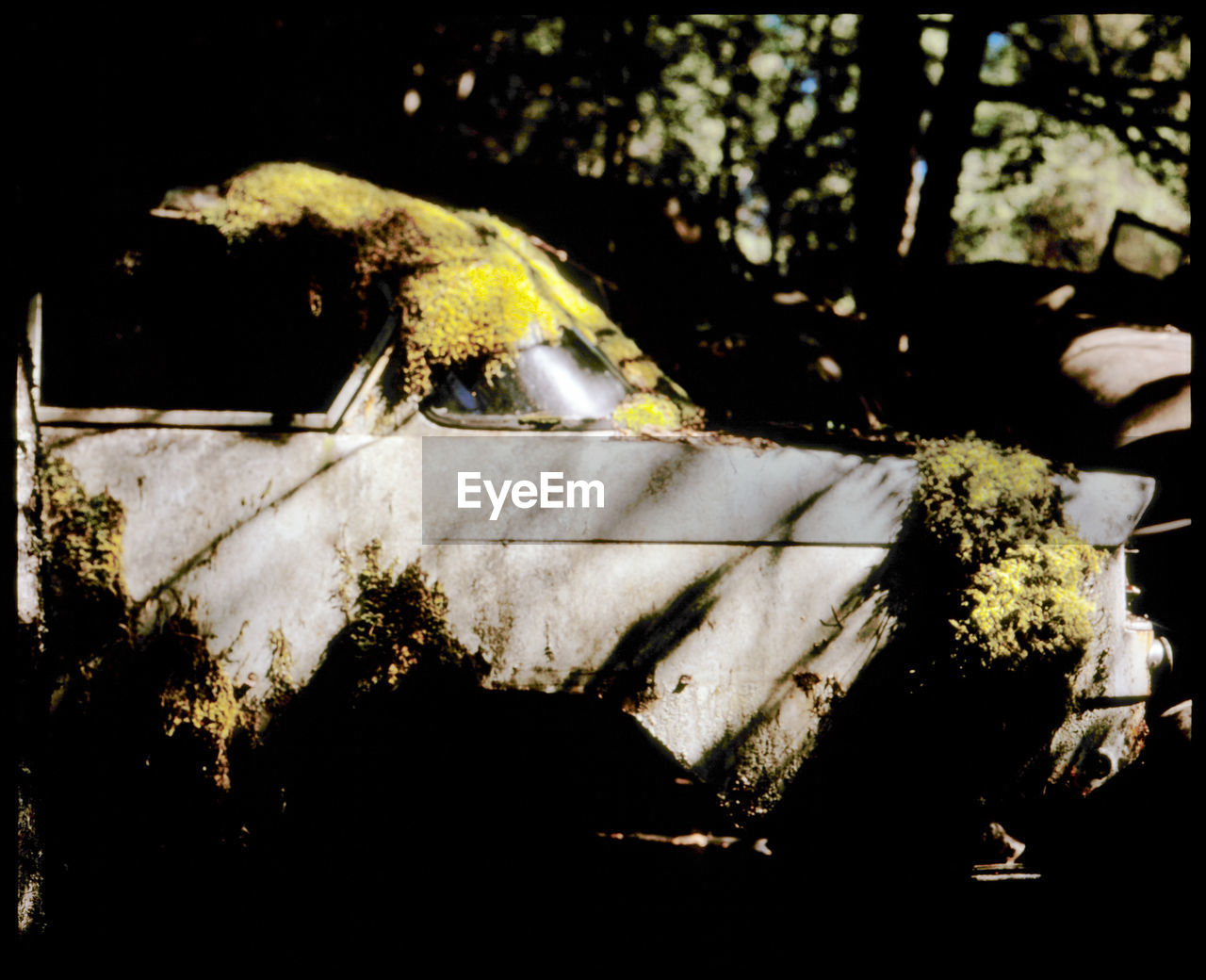 The beauty of the abandonded car cemetery Båstnäs Abandoned Analogue Photography Auto Båstnäs Båstnäs Töcksfors Car Cemetery Civilization Film Photography Forrest History Left Alone Medium Format Film Moss Nature No People Outdoors Rust Scandinavia Slidefilm Sun Trip Vintage Vintage Cars