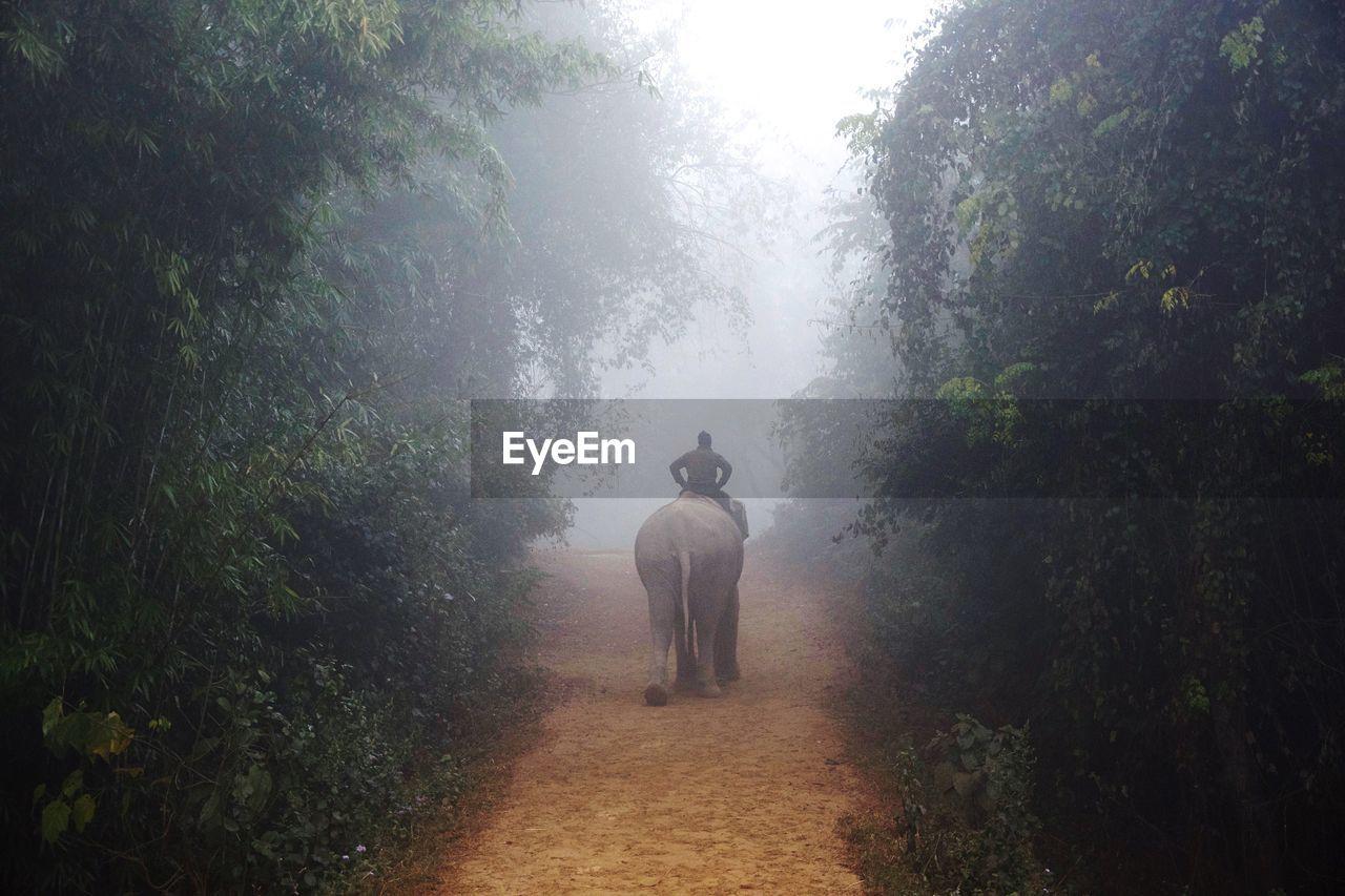 REAR VIEW OF MEN WALKING ON FOREST