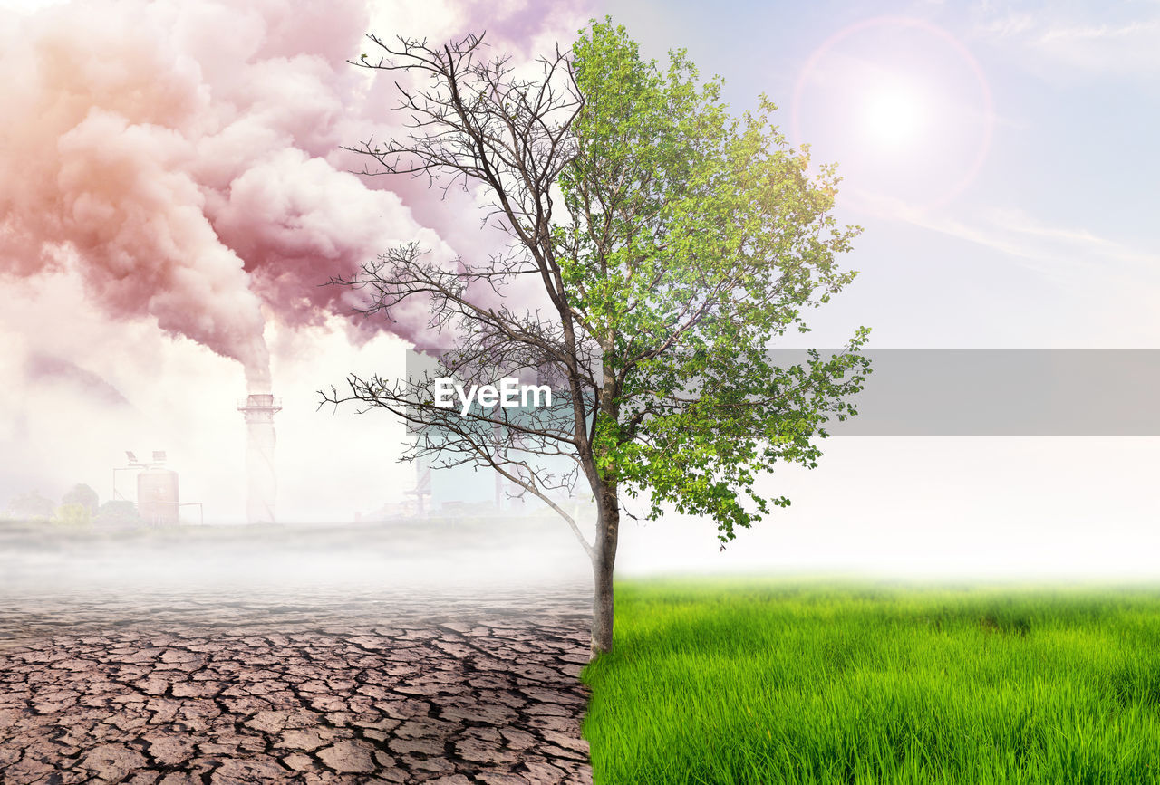 tree, plant, environment, sky, nature, smoke - physical structure, field, day, environmental issues, no people, pollution, land, landscape, sunlight, beauty in nature, scenics - nature, emitting, sun, outdoors, lens flare, air pollution, atmospheric