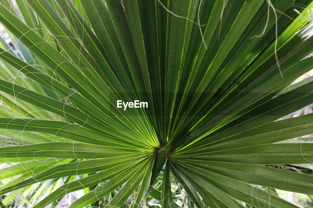 green color, leaf, growth, nature, day, no people, beauty in nature, backgrounds, close-up, outdoors, palm tree, freshness, fragility, tree