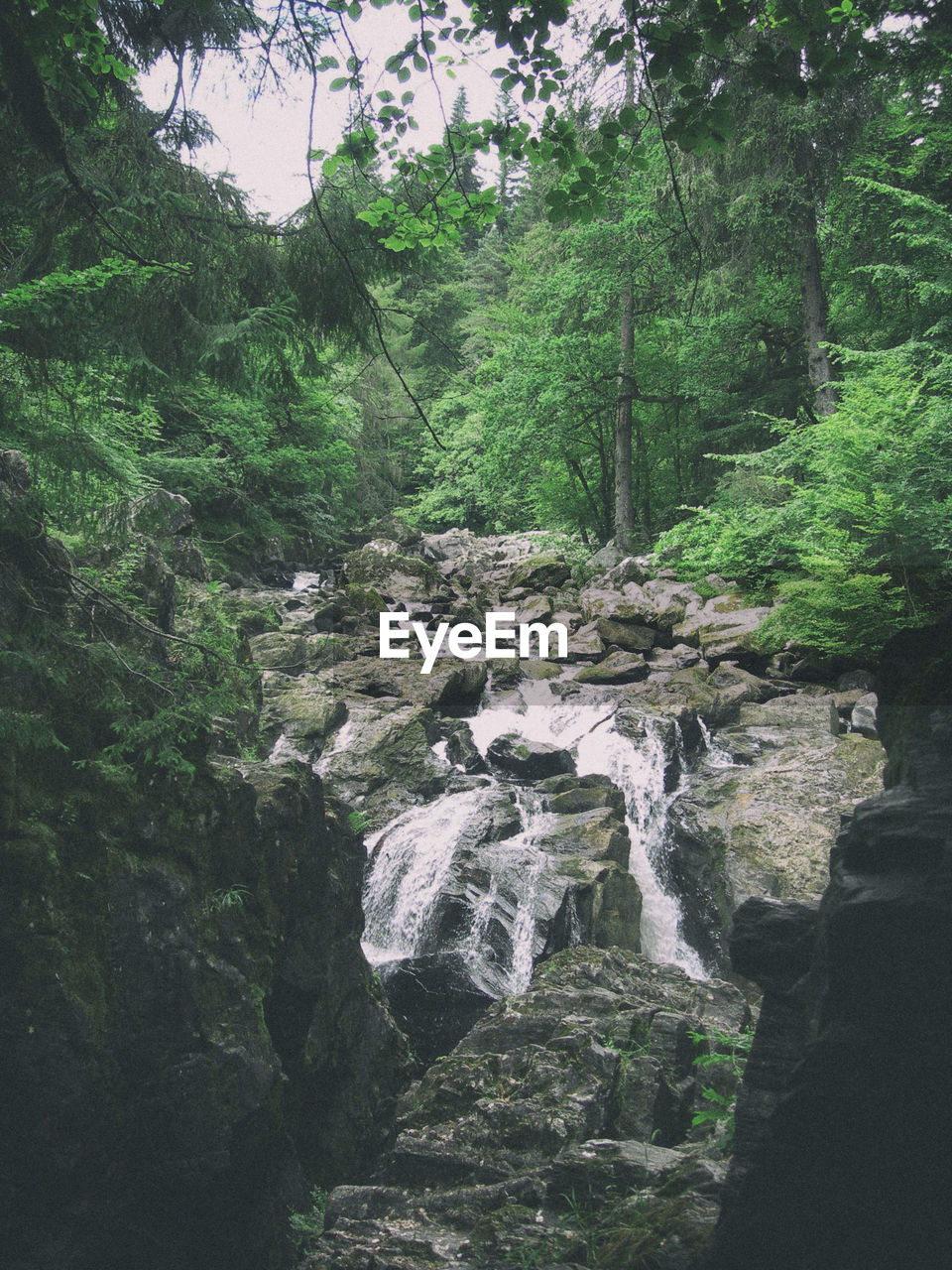 tree, plant, forest, rock, beauty in nature, growth, nature, water, solid, rock - object, land, flowing water, motion, waterfall, day, scenics - nature, non-urban scene, tranquility, green color, outdoors, no people, flowing, rainforest