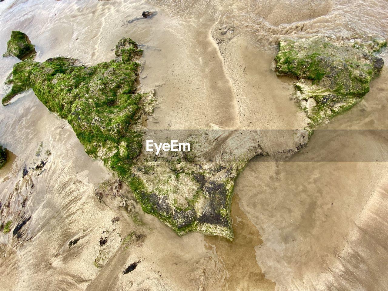 Rocks with algae - high angle view of beach