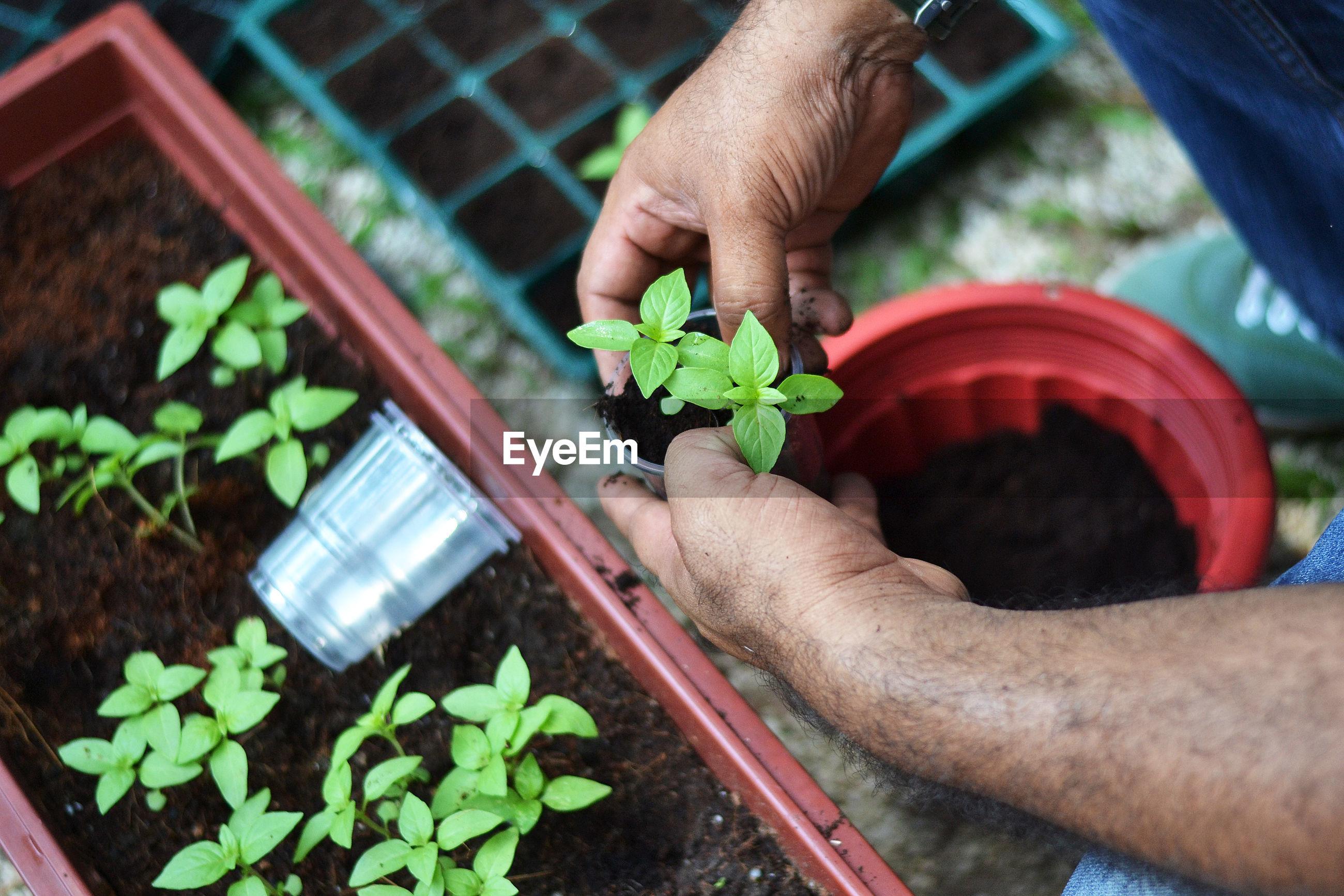 Close-up of man potting plants