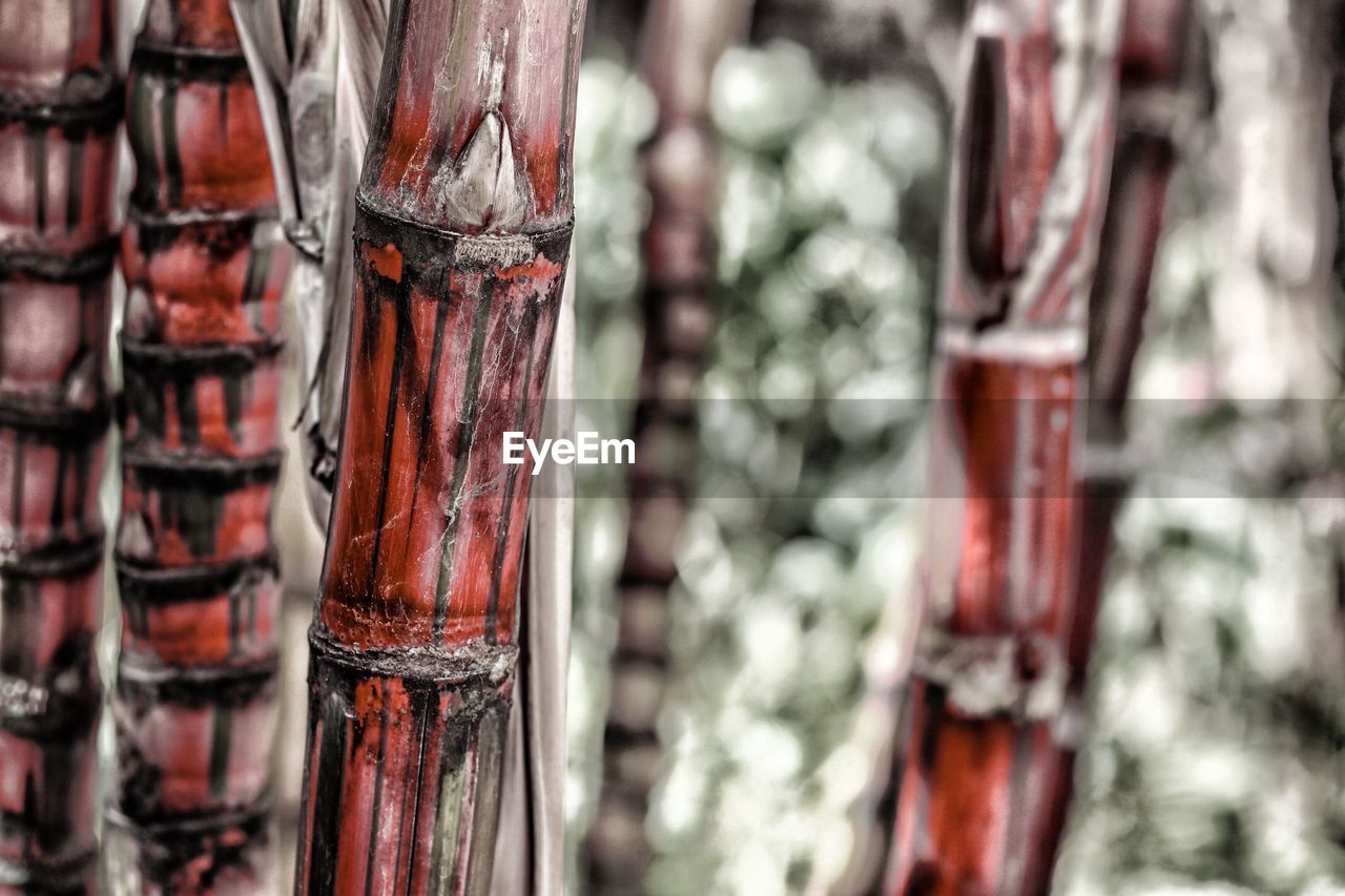 no people, focus on foreground, close-up, day, red, outdoors, nature, tree