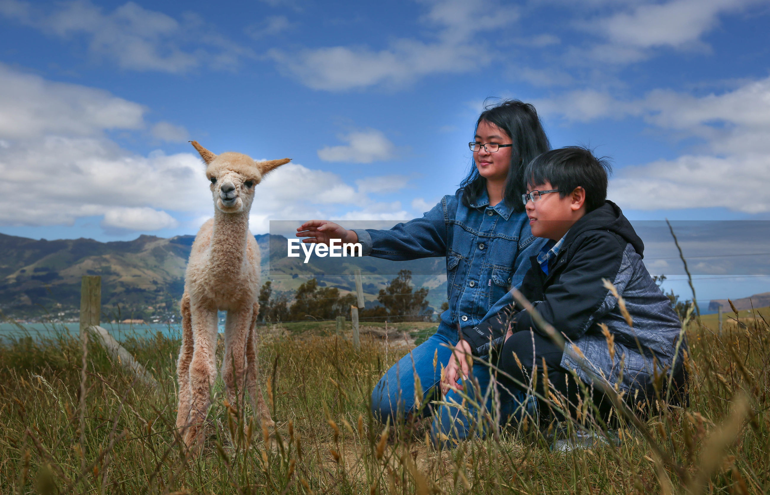 Siblings looking at alpaca on grassy field against sky