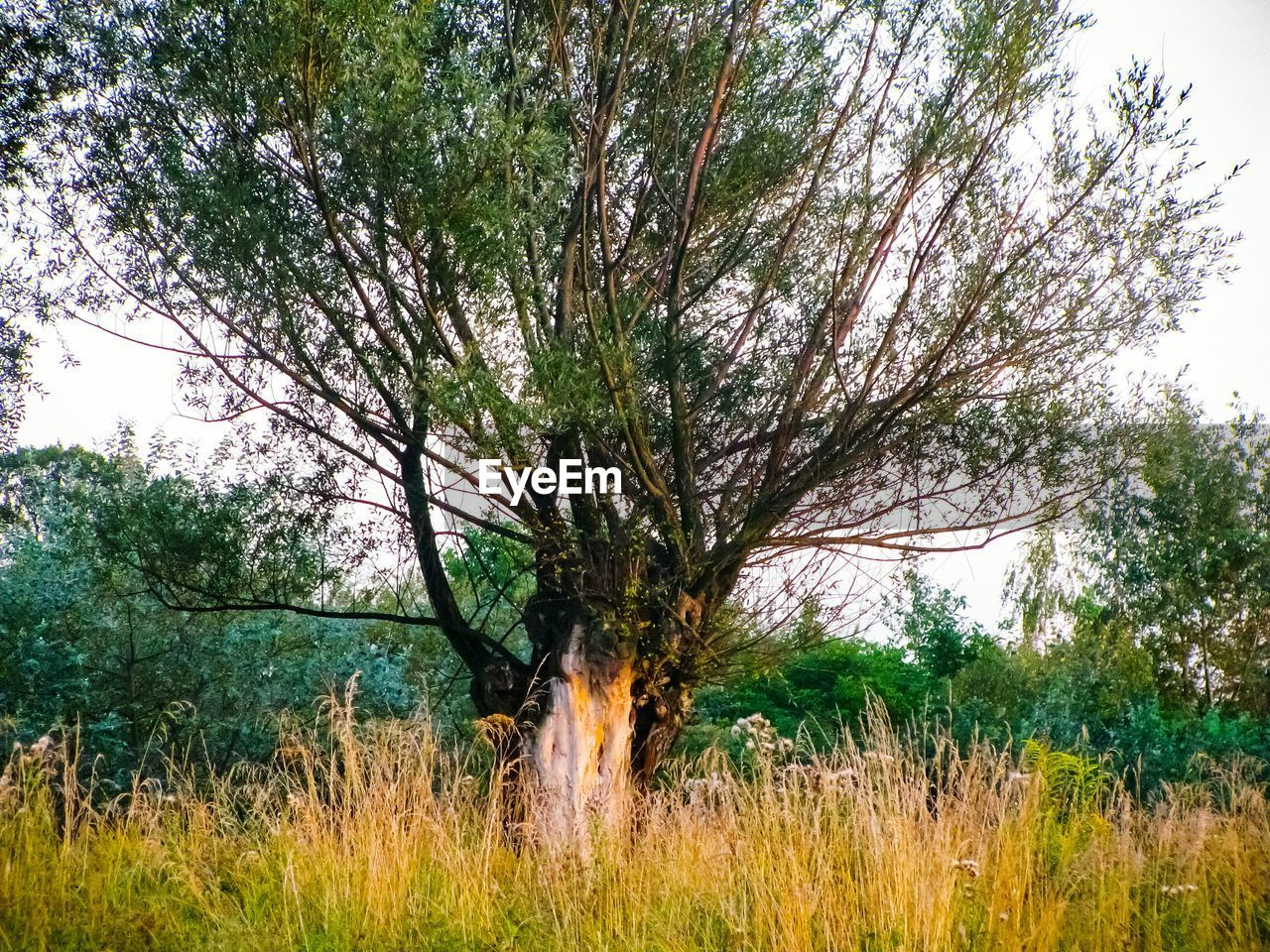 tree, grass, nature, field, outdoors, landscape, growth, day, beauty in nature, branch, forest, no people, sky