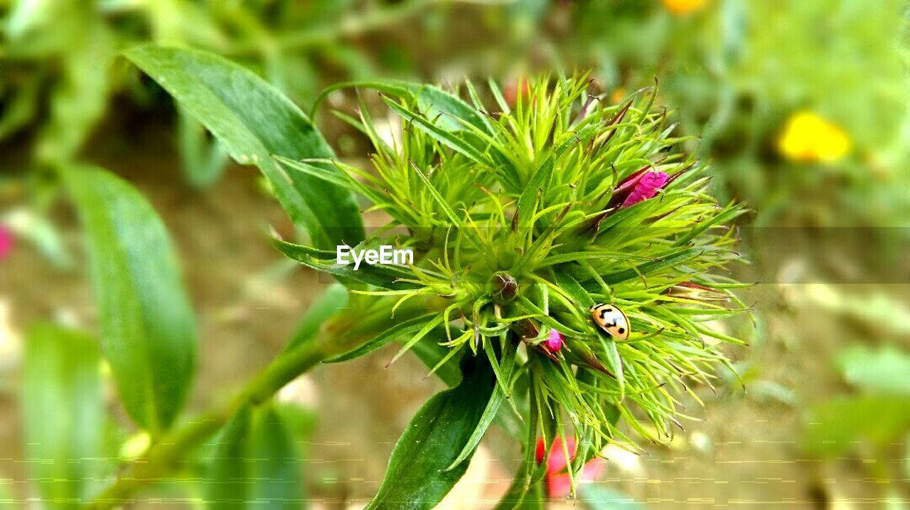 growth, green color, plant, nature, beauty in nature, flower, focus on foreground, leaf, close-up, no people, outdoors, fragility, day, freshness