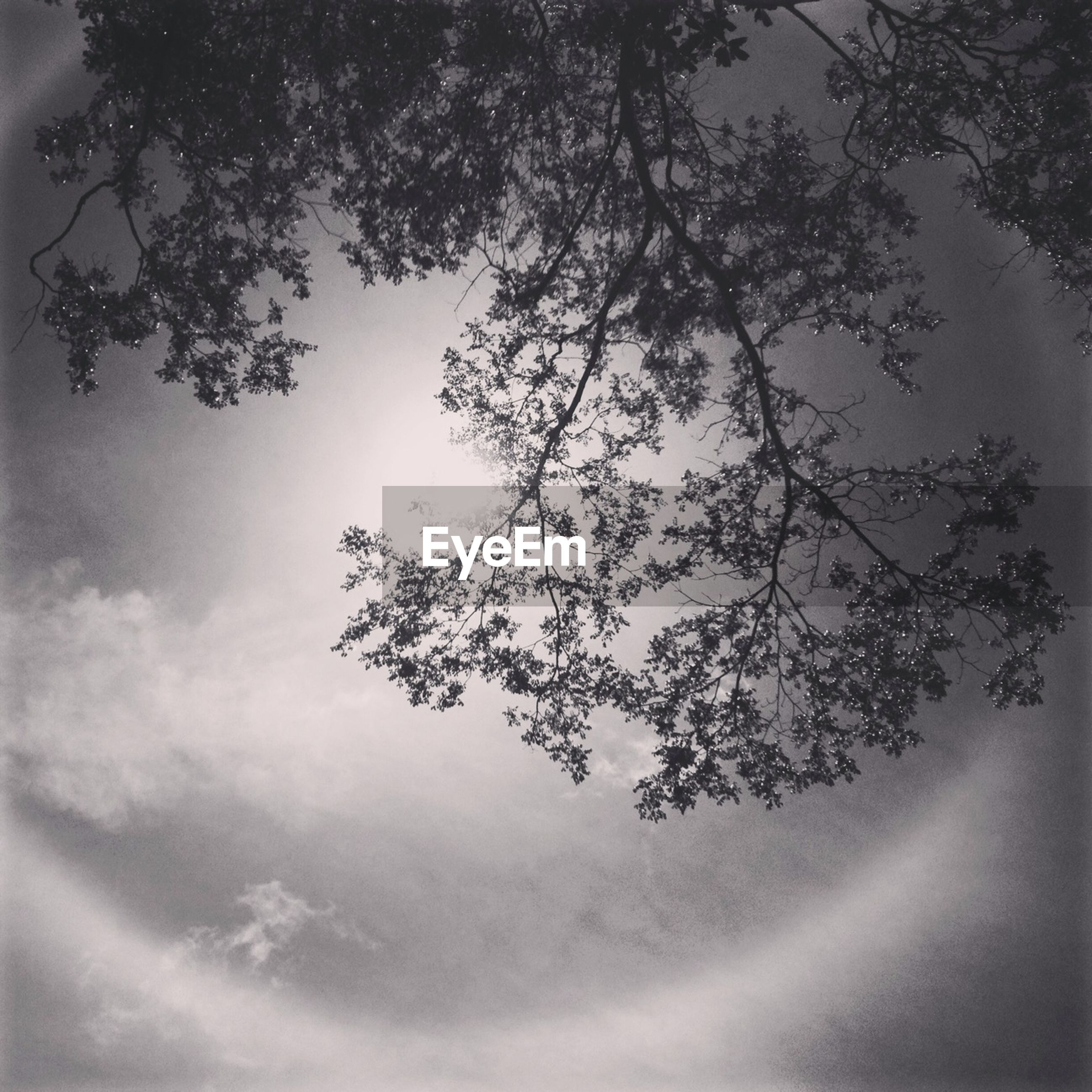 tree, sky, low angle view, branch, growth, tranquility, beauty in nature, nature, cloud - sky, tranquil scene, scenics, silhouette, cloudy, no people, outdoors, day, cloud, idyllic, sunlight, leaf