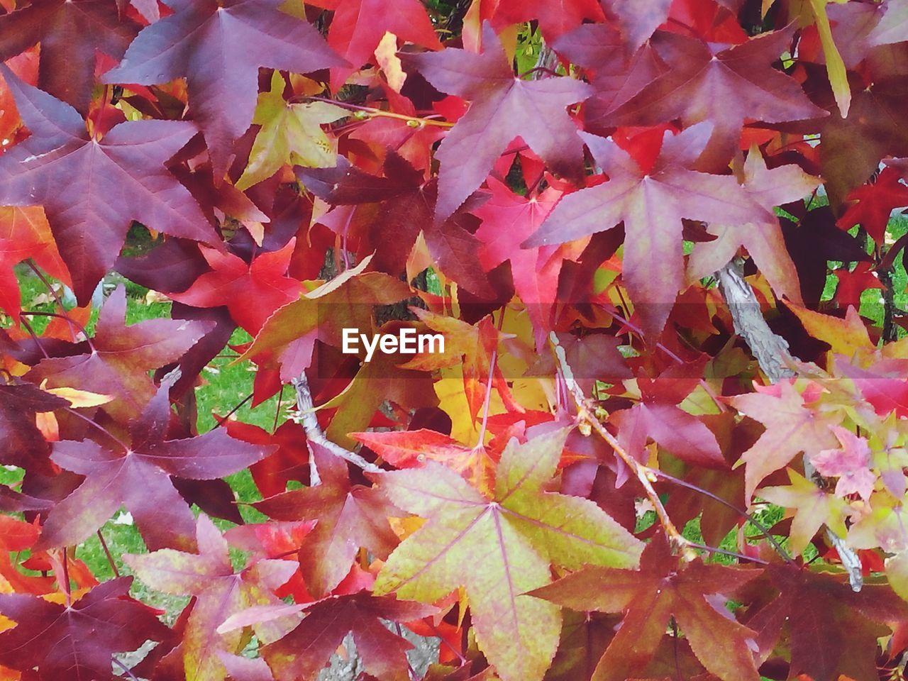 Full frame shot of leaves on tree during autumn
