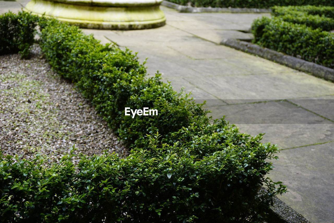 growth, plant, nature, outdoors, green color, footpath, day, no people, topiary, tree, grass, beauty in nature, flowerbed, close-up, freshness