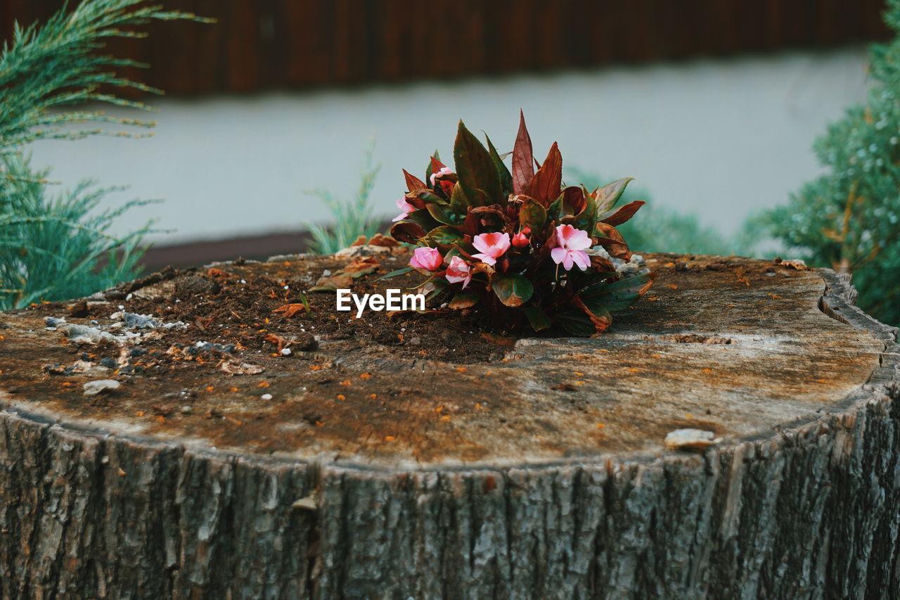 Close-up of flowering plant on tree stump