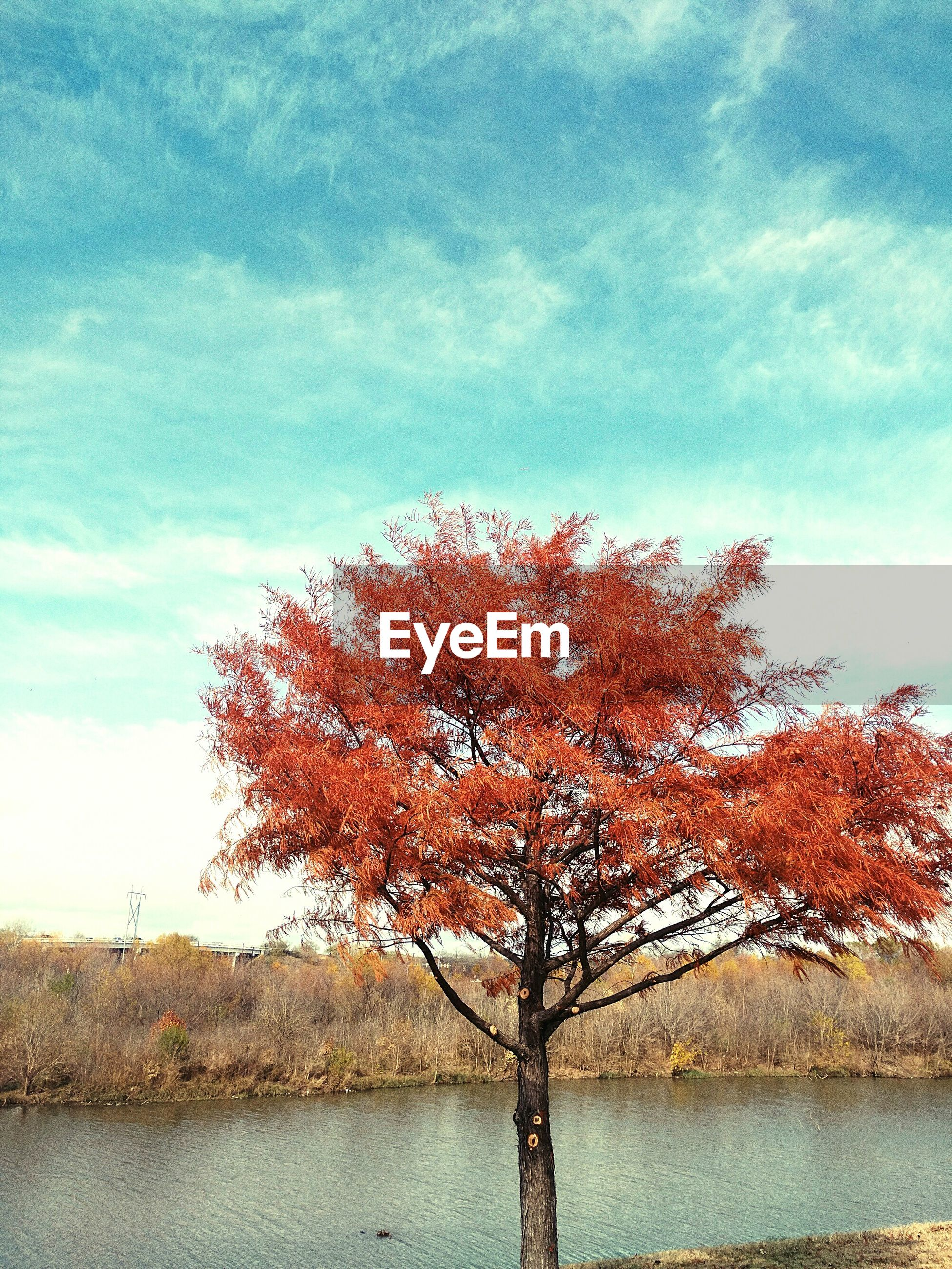 tree, growth, sky, nature, beauty in nature, water, no people, red, outdoors, scenics, tranquility, day, branch, freshness, single tree