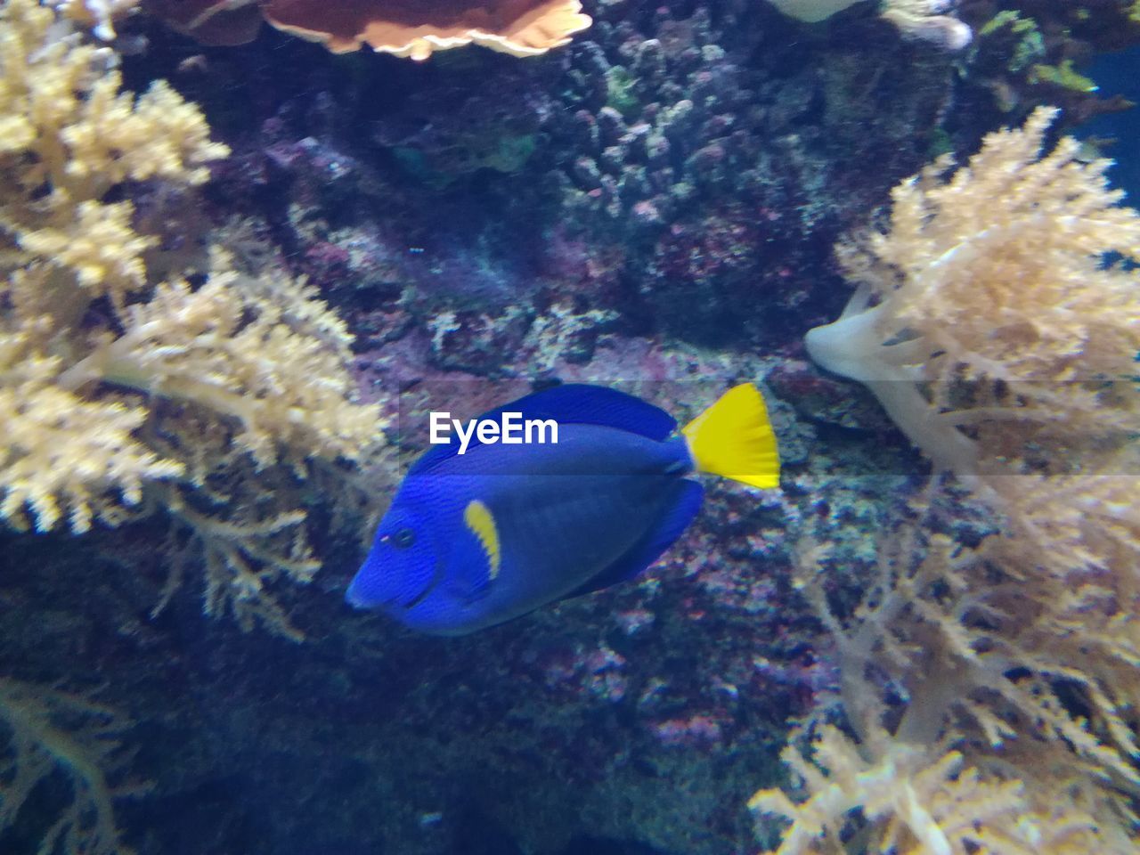 underwater, animals in the wild, animal themes, sea life, fish, undersea, one animal, swimming, no people, nature, water, animal wildlife, coral, close-up, sea, beauty in nature, day, outdoors