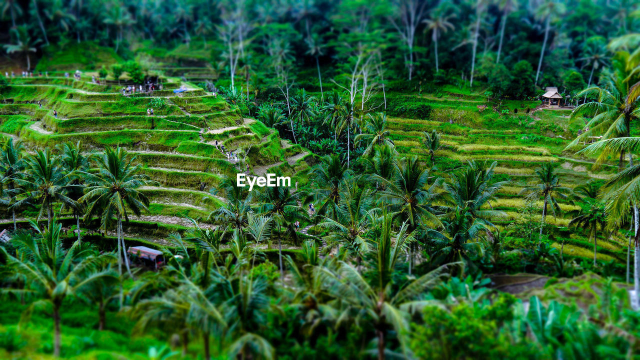 agriculture, nature, field, farm, landscape, growth, green color, rice paddy, beauty in nature, outdoors, scenics, rural scene, lush foliage, forest, terraced field, day, no people, tranquility, tree, plant, grass, tea crop, freshness