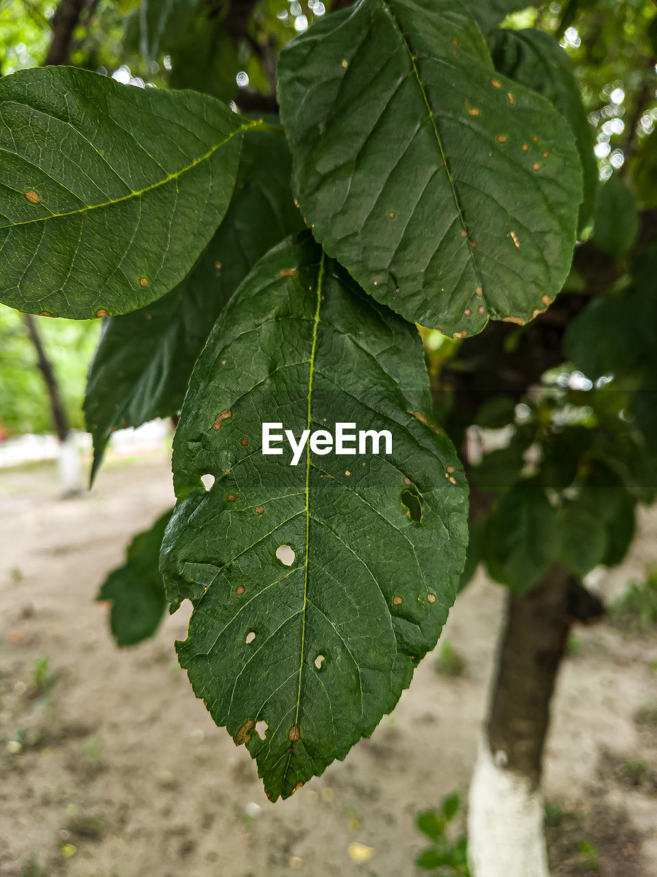 leaf, plant part, green color, plant, close-up, focus on foreground, nature, growth, leaf vein, beauty in nature, day, outdoors, no people, water, drop, high angle view, sunlight, wet, freshness, leaves