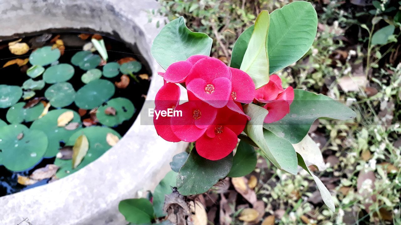 growth, leaf, nature, plant, day, beauty in nature, petal, outdoors, fragility, no people, freshness, blooming, close-up, flower, flower head, periwinkle