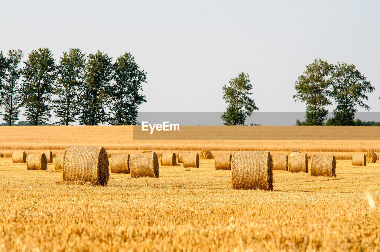 Hay bales on land against clear sky