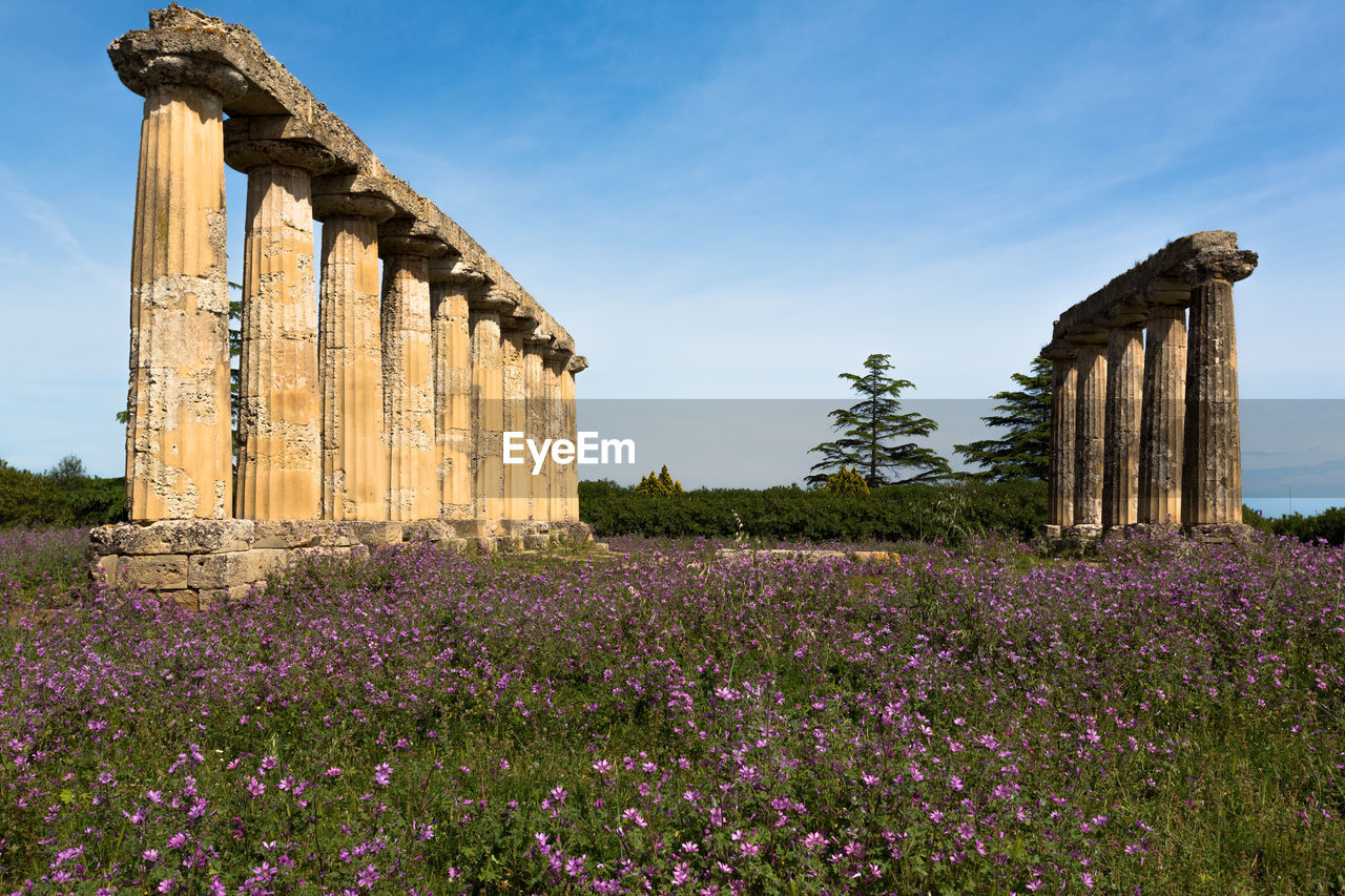 plant, sky, flower, nature, flowering plant, architecture, history, the past, growth, built structure, purple, beauty in nature, field, no people, land, day, ancient, freshness, architectural column, outdoors, lavender, ancient civilization, ruined