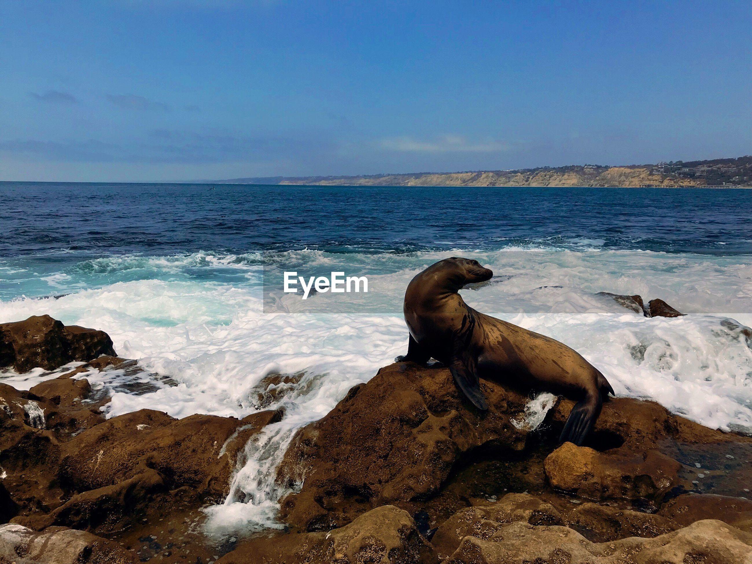 SEA WAVES ON ROCKS AT SHORE