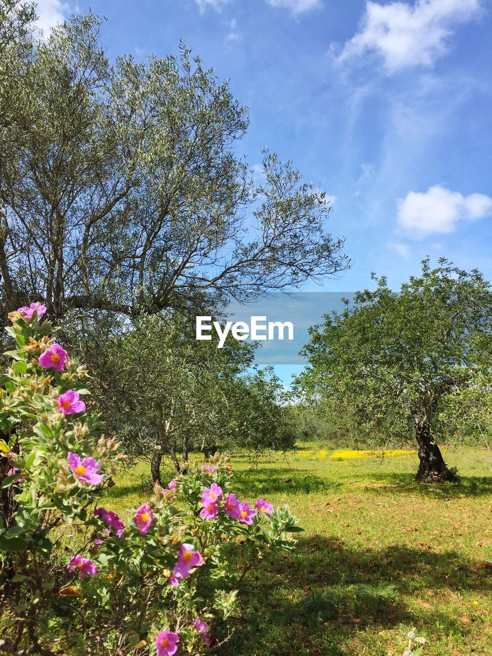 plant, tree, sky, flower, beauty in nature, growth, nature, field, flowering plant, land, day, grass, cloud - sky, green color, tranquil scene, tranquility, landscape, environment, scenics - nature, freshness, outdoors